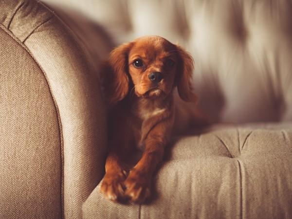 Consejos para proteger tu sofá de tus mascotas
